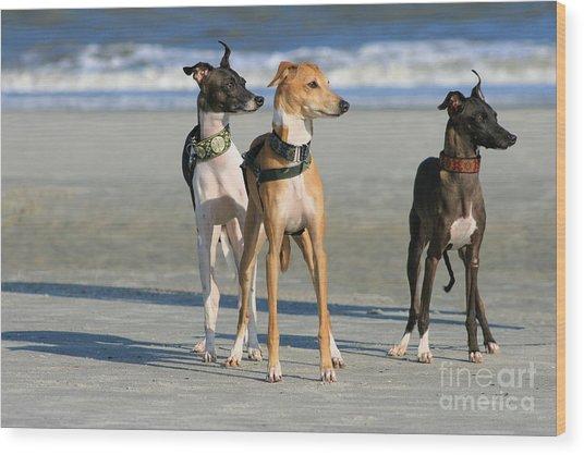 Italian Greyhounds On The Beach Wood Print