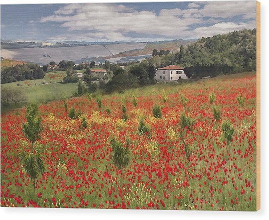 Italian Poppy Field Wood Print