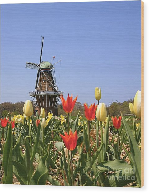 Its Tulip Time Wood Print by Robert Pearson