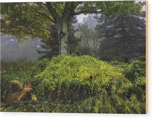 Ivy Garden Wood Print