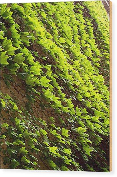 Ivy League-ivy Lines Wood Print by Caroline  Urbania Naeem