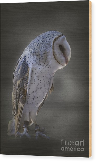 Ivy The Barn Owl Wood Print