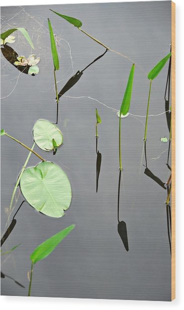 Izzy's Pond Close Up Wood Print
