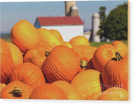 Jack-o-lantern Pumpkins At Farm Wood Print