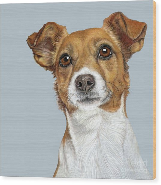 Wood Print featuring the drawing Jack Russell Terrier by Donna Mulley