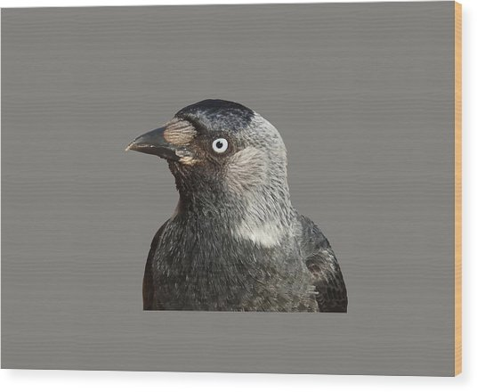 Jackdaw Corvus Monedula Bird Portrait Vector Wood Print