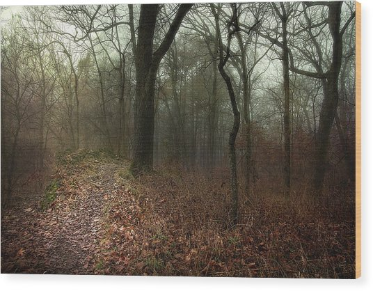 Jacomo Trail Wood Print by Michael Rosell