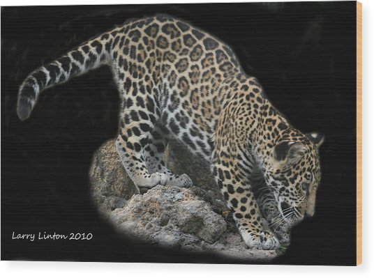 Jaguar Cub Wood Print by Larry Linton
