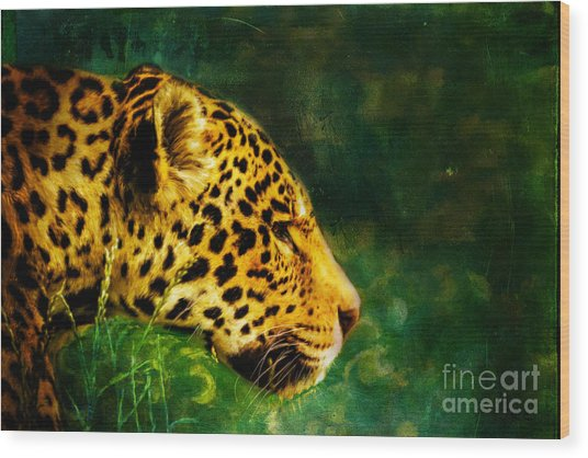 Jaguar In The Grass Wood Print