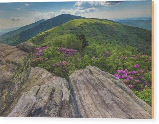 Jane Bald Rhododendrons Wood Print