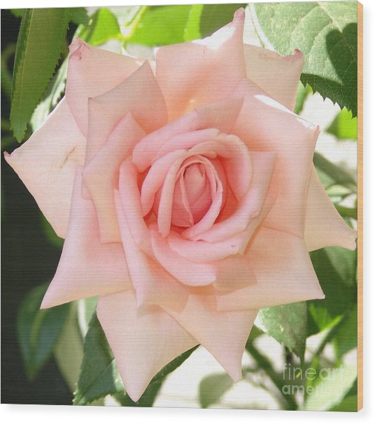 Janet's Pink Rose Wood Print