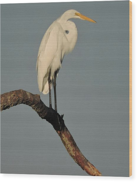 January Egret Wood Print