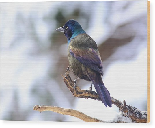 Wood Print featuring the photograph January Grackle by Daniel Reed