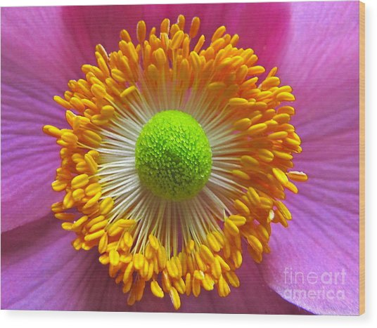 Japanese Anemone Close Up Wood Print