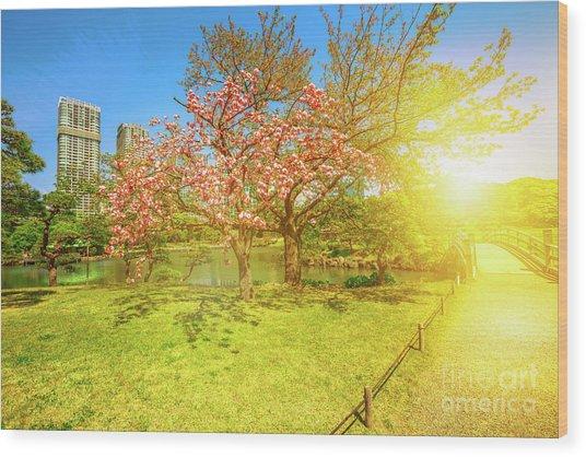 Japanese Garden Cherry Blossom Wood Print