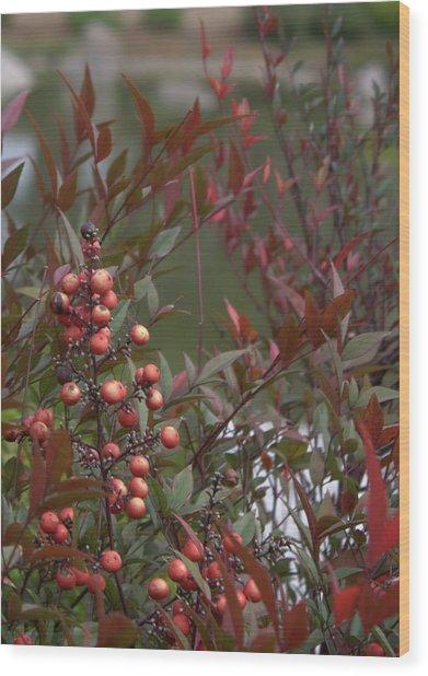 Japanese Garden Plants Wood Print