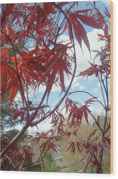 Japanese Maple Leafing Out Wood Print