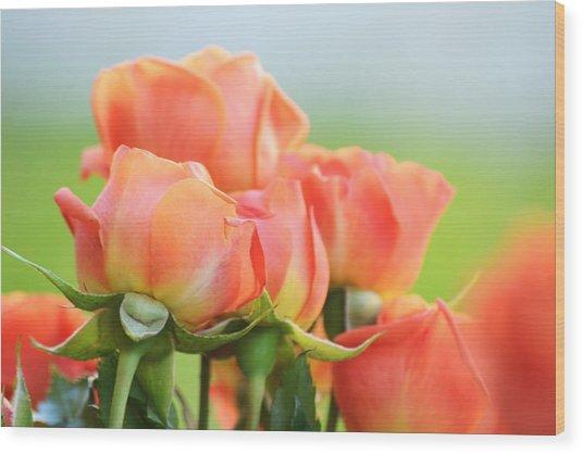 Jardin De Rosas Wood Print