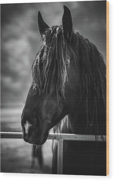 Jay The Rasta Horse Wood Print