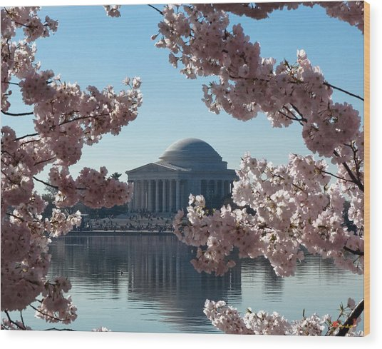 Jefferson Memorial At Cherry Blossom Time On The Tidal Basin Ds008 Wood Print