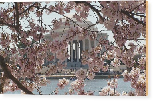 Jefferson Through The Cherry Blossoms Wood Print