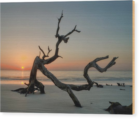 Jekyll Island Driftwood Wood Print