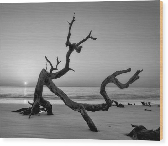 Jekyll Island Driftwood In Black And White Wood Print