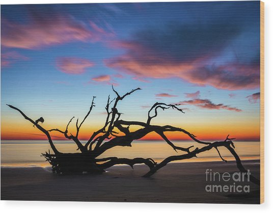 Jekyll Island Sunrise On Driftwood Beach Wood Print