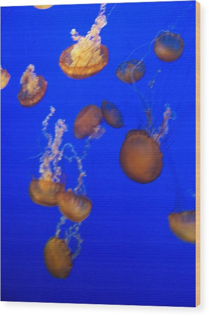 Jelly Fish 2 Wood Print by Dawn Marie Black