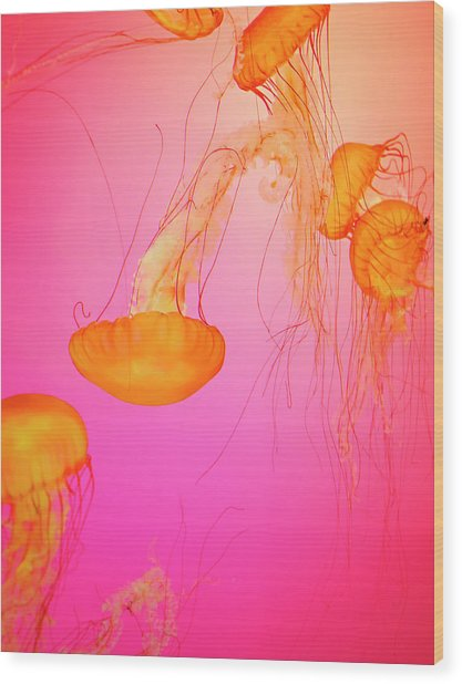 Jelly Fish Wood Print by Tricia S. Schumacher
