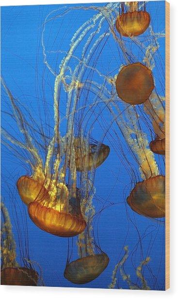 Jellyfish Family Wood Print