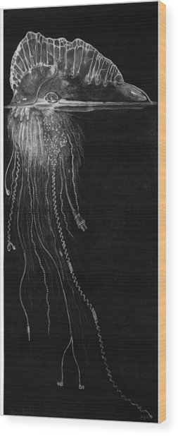 Jellyfish With Cords Wood Print by Elizabeth Comay