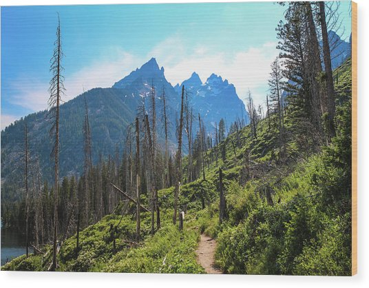 Jenny Lake Trail Wood Print