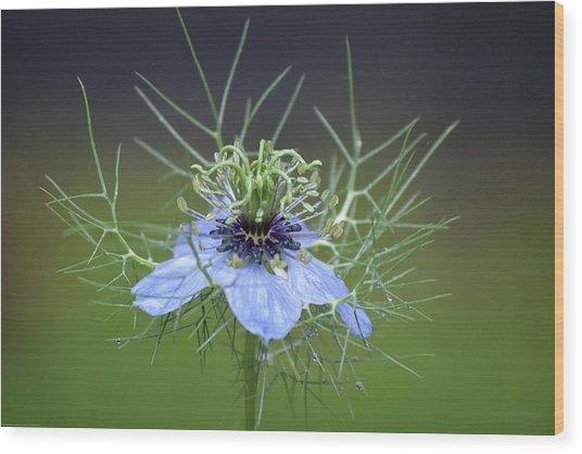 Jester's Hat Flower Wood Print