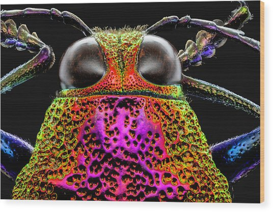 Jewel Beetle 3x Wood Print