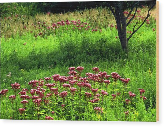 Joe Pye Weed Wood Print