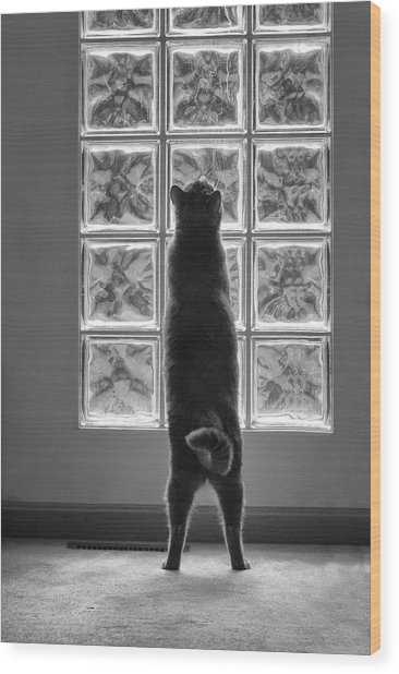 Joseph At The Window Wood Print