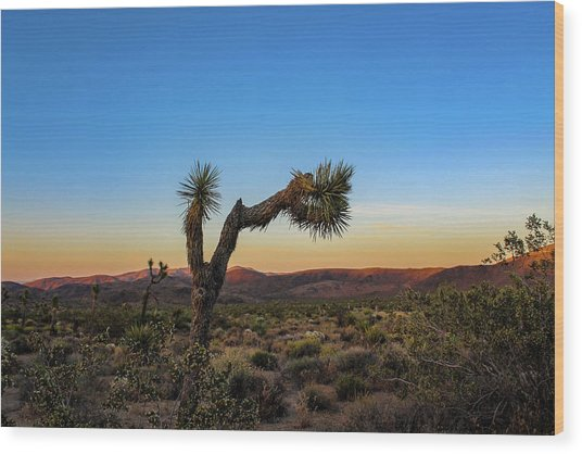 Joshua Tree Wood Print