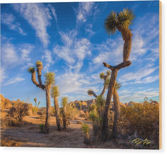 Joshua Tree Dawn Wood Print