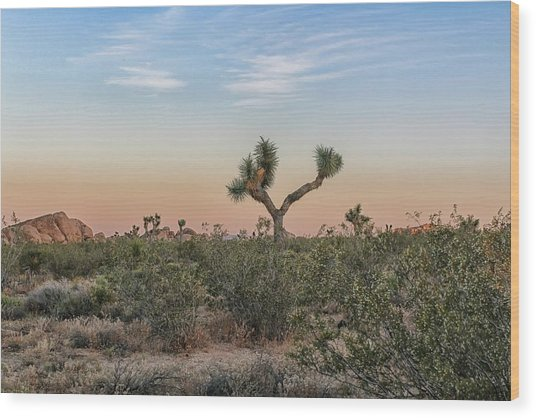 Joshua Tree Evening Wood Print