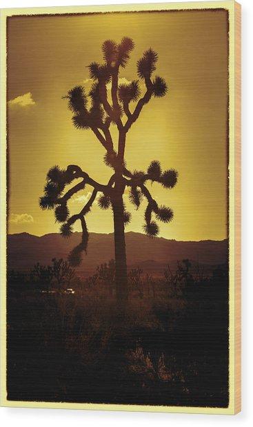 Joshua Tree Glow #2 Wood Print