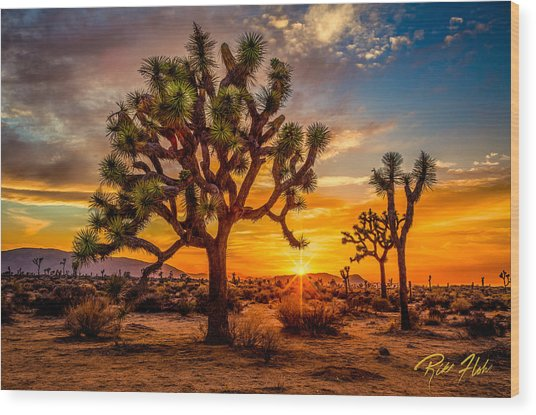 Joshua Tree Glow Wood Print