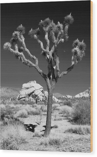 Joshua Tree In Monochrome Wood Print