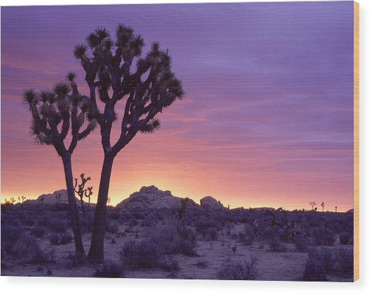 Joshua Tree Sunrise Wood Print