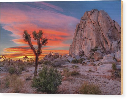 Joshua Tree Sunset Wood Print