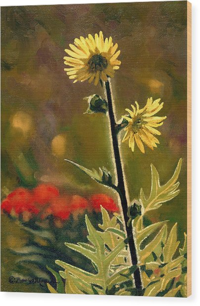 July Afternoon-compass Plant Wood Print