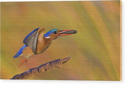 Jumping Jewel Wood Print by Basie Van Zyl