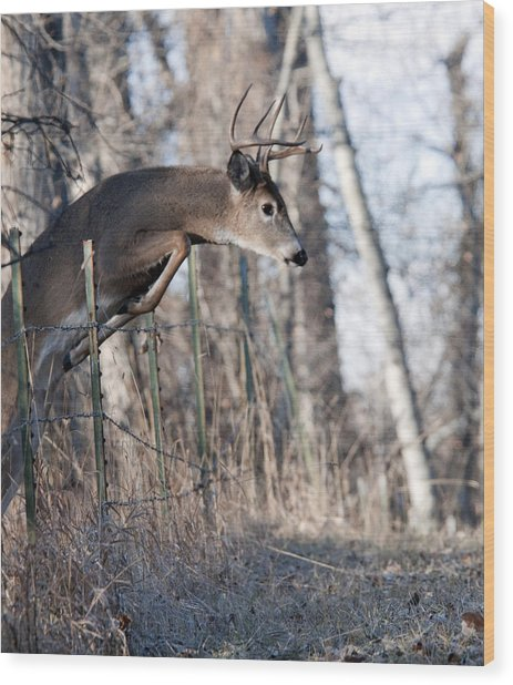 Jumping White-tail Buck Wood Print