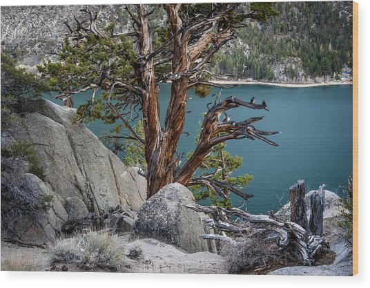 June Lake Juniper Wood Print