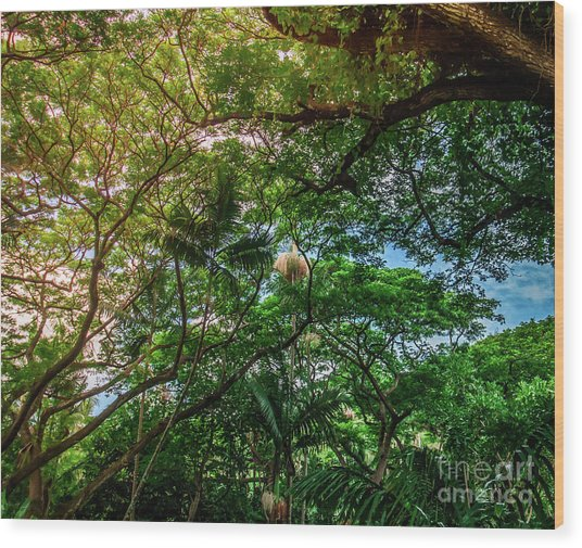 Jungle Canopy Kauai Hawaii Wood Print by Blake Webster